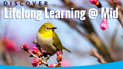 Discover Lifelong Learning at Mid