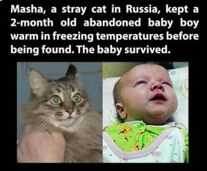 Masha, a stray cat in Russia, kept a 2 month old abandoned baby boy warm in freezing temperatures before being found. The baby survived.